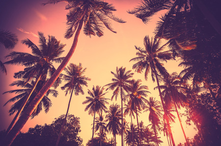 Photo for Vintage toned holiday background made of palm tree silhouettes at sunset. - Royalty Free Image