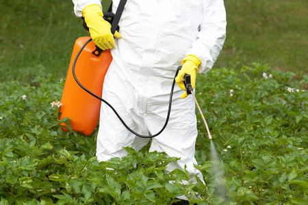 Photo pour Farmer spraying toxic pesticides in the vegetable garden - image libre de droit