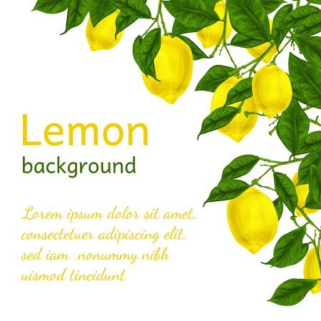 Illustration pour Natural organic ripe juicy lemon tree branch background poster frame template illustration - image libre de droit