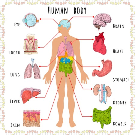 Illustration pour Human body medical infographics with person silhouette and organs vector illustration - image libre de droit