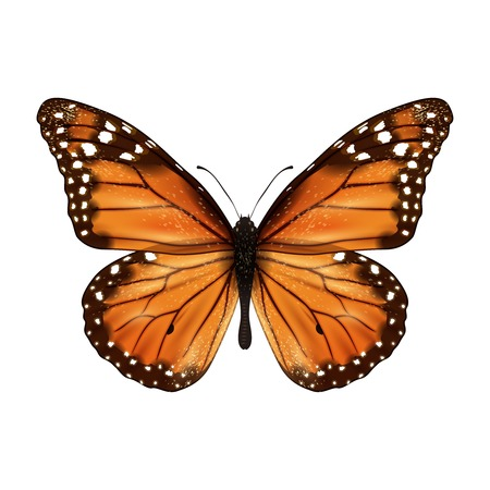 Ilustración de Insects realistic colored butterfly isolated on white background vector illustration - Imagen libre de derechos