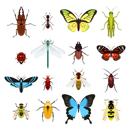 Illustration pour Insects colored decorative icons set with dragonfly beetle butterfly isolated vector illustration - image libre de droit