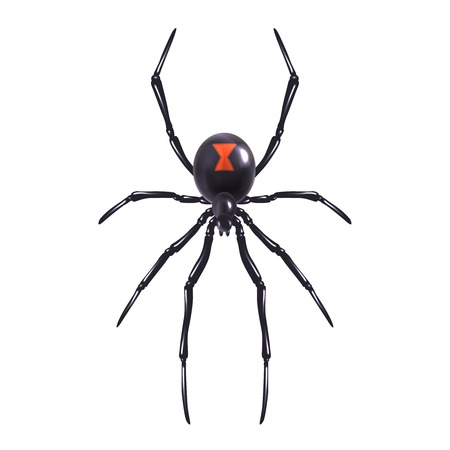 Illustration pour Insect realistic poisonous spider isolated on white background vector illustration - image libre de droit