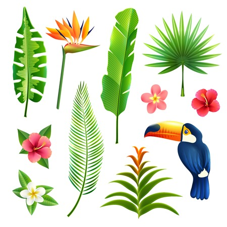 Illustration pour Tropical gardens  leaves and flower set with toucan bird isolated vector illustration - image libre de droit