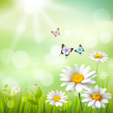 Illustration pour Summer meadow background with white daisy flowers and butterflies vector illustration - image libre de droit