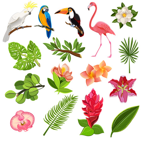 Illustration pour Exotic tropical leaves and parrots pictograms collection with orchids hibiscus and magnolia flowers buds abstract vector illustration - image libre de droit