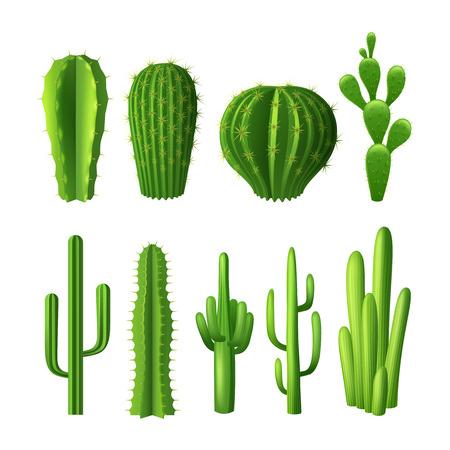 Illustration pour Different types of cactus plants realistic decorative icons set isolated vector illustration - image libre de droit