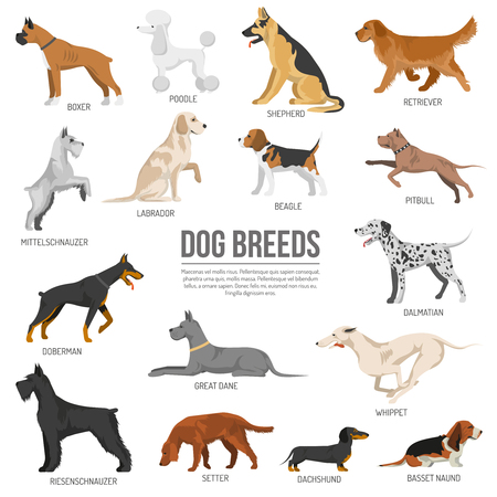 Illustration pour Dogs breed set with bull terrier boxer poodle isolated vector illustration - image libre de droit