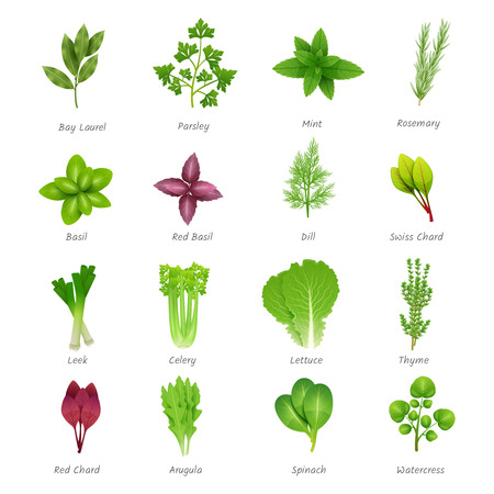 Ilustración de Icons set of different special herbs wich using in cooking with titles realistic isolated vector illustration - Imagen libre de derechos