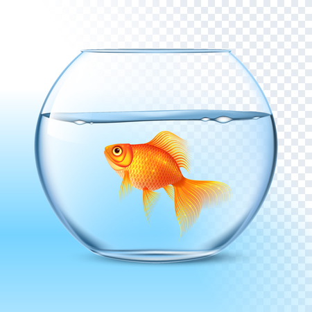 Single goldfish swimming in transparent round glass bowl aquarium realistic image print vector illustration