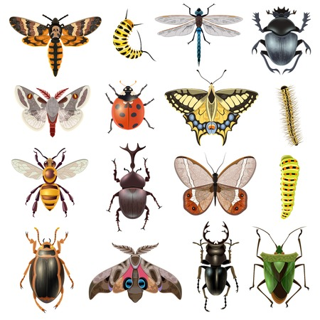 Ilustración de Insects realistic icons set with butterfly and beetles isolated vector illustration - Imagen libre de derechos