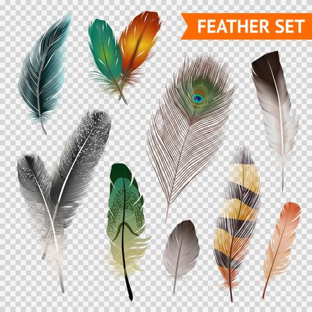 Illustration pour Bird feathers realistic set on transparent background isolated vector illustration - image libre de droit