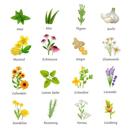 Illustration pour Healing herbs and medicinal plants flat icons collection with ginger chamomile and garlic abstract isolated vector illustration - image libre de droit