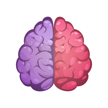 Illustration pour Human brain two different colored symbolic left and right cerebral hemispheres model image icon abstract vector illustration - image libre de droit