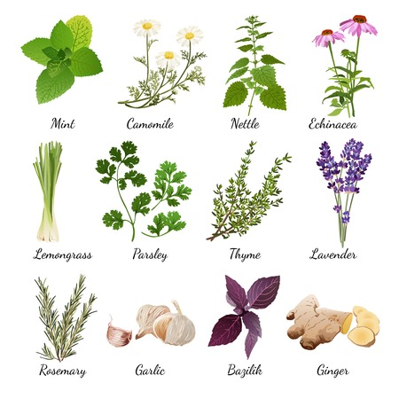 Illustration pour Set with organic herbs objects and wildflowers elements isolated vector illustration - image libre de droit