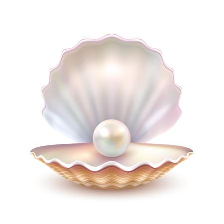 Illustration pour Finest quality beautiful natural open pearl shell close up realistic single valuable object image vector illustration - image libre de droit