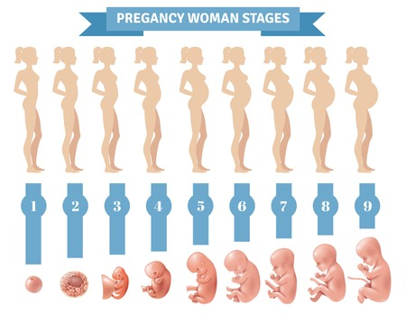 Ilustración de Pregnancy woman stages vector illustration with flat silhouettes of pregnant women and realistic human embryonic development icons - Imagen libre de derechos