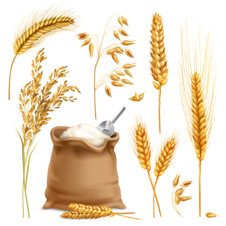 Photo for Set of realistic agricultural crops including rice, oats, wheat, barley, sack of flour isolated vector illustration - Royalty Free Image