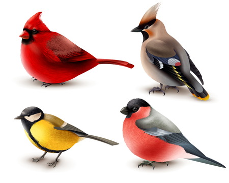 Illustration pour Set of winter birds with red cardinal, titmouse, waxwing and bullfinch, 3d design isolated vector illustration - image libre de droit