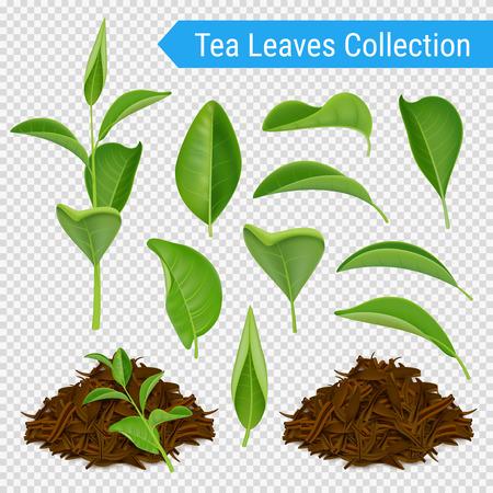 Ilustración de Set of realistic green leaves and heaps of dried tea foliage isolated on transparent background vector illustration - Imagen libre de derechos