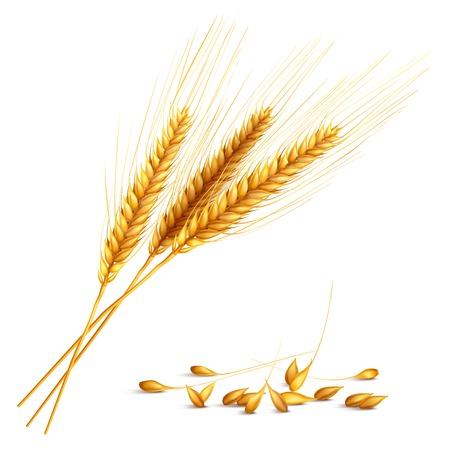 Ilustración de Barley ears and grain - Imagen libre de derechos
