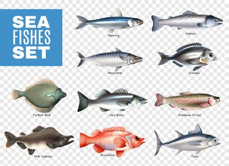 Illustration pour Set of sea fishes with letterings on transparent background isolated vector illustration - image libre de droit