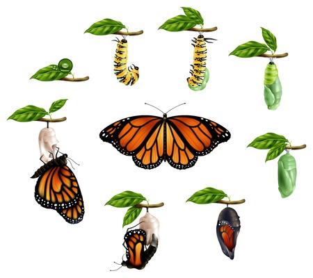 Photo pour Life cycle of butterfly realistic icons set of caterpillar larva pupa imago phases vector illustration - image libre de droit