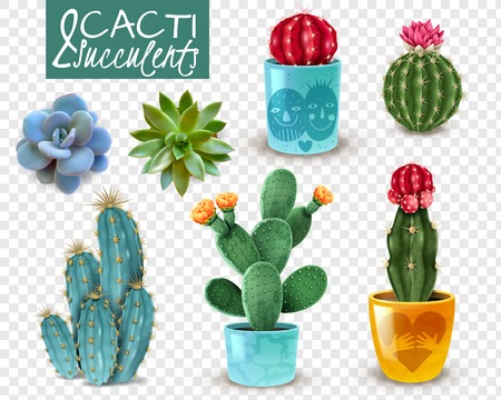 Illustration pour Blooming cacti and popular succulents varieties easy care decorative indoor plants realistic set transparent background vector illustration - image libre de droit