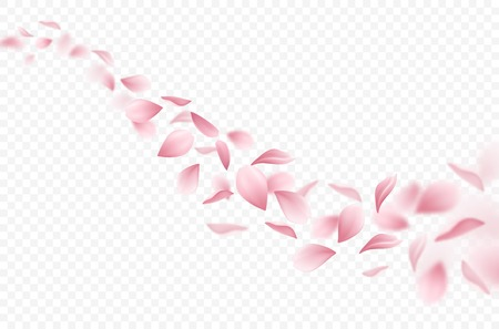 Illustration for Realistic flying sakura petals on transparent background vector illustration - Royalty Free Image