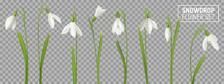 Ilustración de Realistic snowdrop flower set on transparent background with isolated realistic images of natural flowerage with stems vector illustration - Imagen libre de derechos