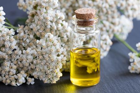 Photo pour A bottle of essential oil with fresh yarrow flowers on a dark background - image libre de droit