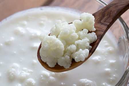 Foto de Kefir grains on a wooden spoon above a jar of milk kefir - Imagen libre de derechos