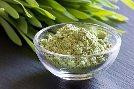 Photo pour Young barley grass with green barley grass powder on a dark background - image libre de droit