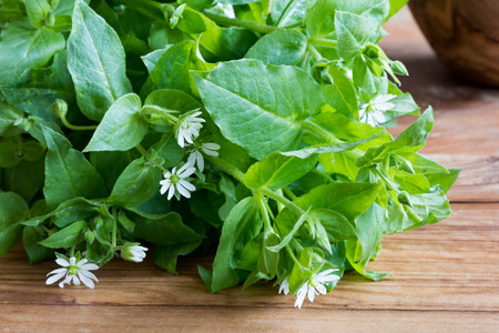Photo pour Fresh chickweed leaves and flowers on a wooden table - image libre de droit
