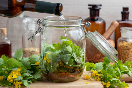 Foto de Preparation of homemade liver tonic by pouring white wine over fresh greater celandine leaves and roots in a glass jar  - Imagen libre de derechos