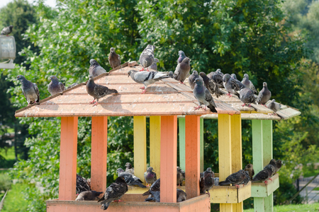 The roof of a wooden pigeon with pigeons sitting on it