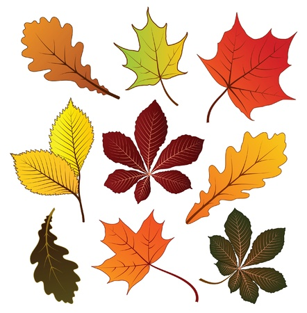 Set of colorful autumn leaves for your design
