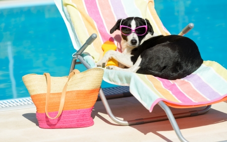 Photo for Funny female dog sunbathing on summer vacation wearing sunglasses  Pet relaxing on a hammock at swimming pool  - Royalty Free Image