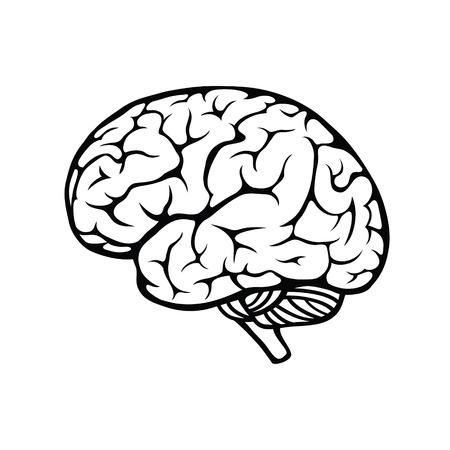 Illustrazione per Vector outline illustration of human brain on white background - Immagini Royalty Free
