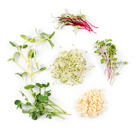 Photo pour Different types of micro greens on white background. Healthy eating concept of fresh garden produce organically grown as a symbol of health and vitamins from nature. Microgreens closeup. - image libre de droit