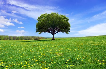 Photo pour Beautiful spring landscape - image libre de droit