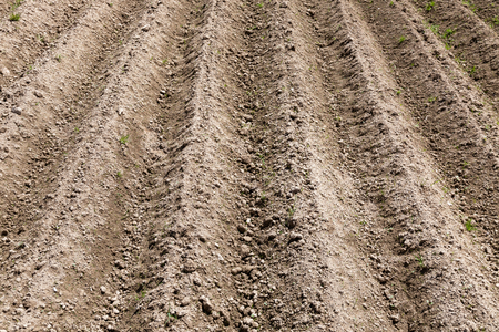 Photo pour Agricultural field in spring. - image libre de droit