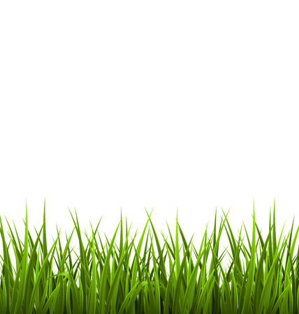 Illustration pour Green grass lawn isolated on white. Floral nature spring background - image libre de droit