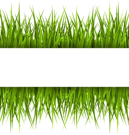 Illustration pour Green grass with frame isolated on white. Floral eco nature background - image libre de droit