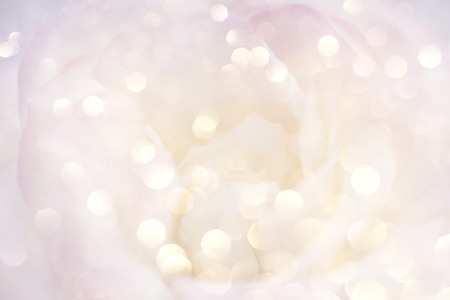 Foto de Romantic background with delicate rose close up. - Imagen libre de derechos