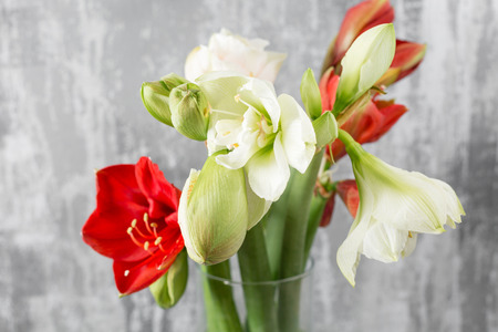 Photo pour Winter flowers. Amaryllis in a vase watering can standing on a wooden table. On the background old gray wall art. - image libre de droit