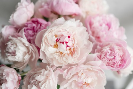 Photo for Cute and lovely peony. - Royalty Free Image