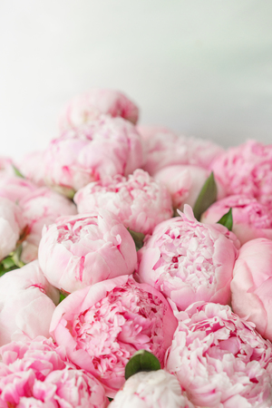 Photo for Wallpaper. Lovely flowers pink peonies . Floral compositions, daylight. - Royalty Free Image