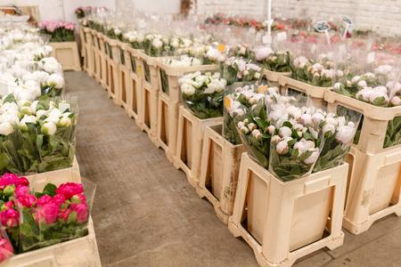 Foto de Warehouse refrigerator, Wholesale flowers for flower shops. White peonies in a plastic container or bucket. Online store. Floral shop and delivery concept. - Imagen libre de derechos