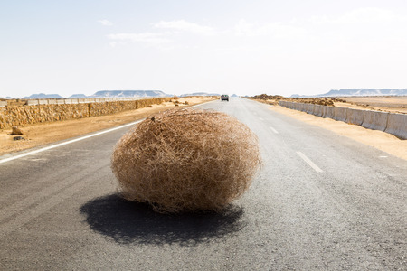 Photo pour Giant tumbleweed on the highway with sandy dunes, between el-Bahariya oasis and Al Farafra oasis, Western Desert of Egypt, between Giza governorate and New Valley Governorate, near White Desert - image libre de droit